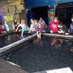 OK Aquarium Touch Tank—Porum GEAR UP students pet sharks and stingrays in the Touch Tank at the OK Aquarium; Left to right: Emery Arnold, Anna Thornton, Rilee Miller, Gracie Tiger, Jayce Montgomery, Jordan Anderson, Emma Murray, Krystina Anderson, Jordan Carter, Ashlynn Anderson, Kyle Rock, Porum teacher DeEdra Anderson, Brayden Stinnett, Blake Catron, Kevin Barnes, Craig Hood, Simon Girty, Nicole Wright, Taber Sangster, Joey Colbert, Eric Chapin and Rawley Killingsworth